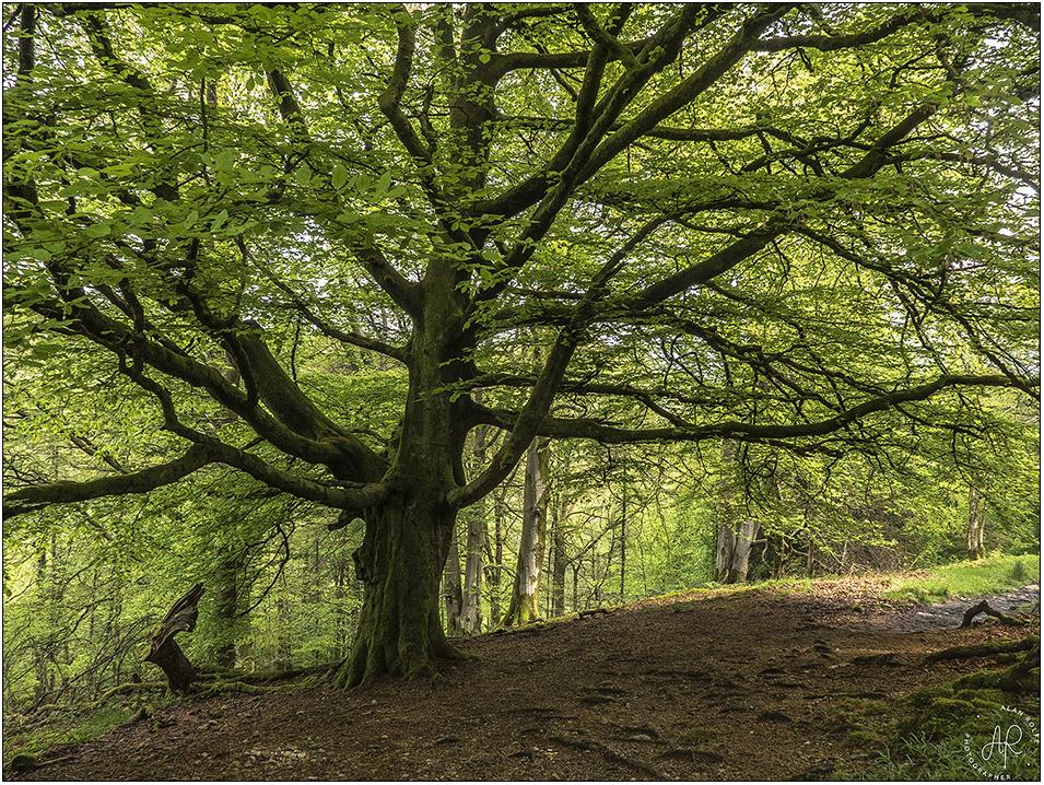 20140505-Tree-P1060523_large