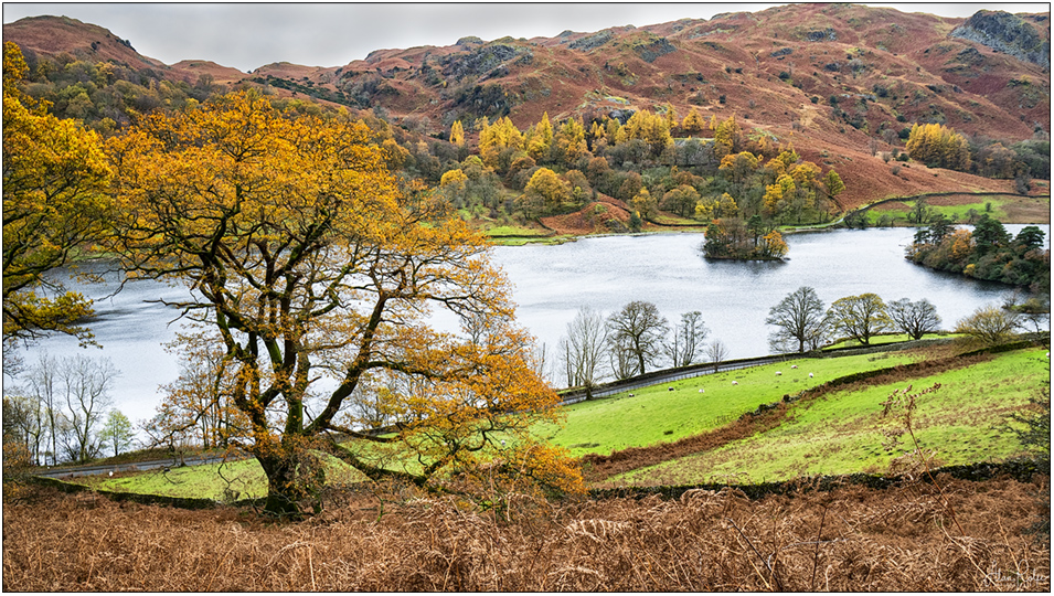 20181107-Alcock-Tarn-walk-DSC07564-copy_large