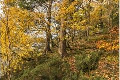 20181104-Friars-Crag-walk-IMG_4177-copy_large